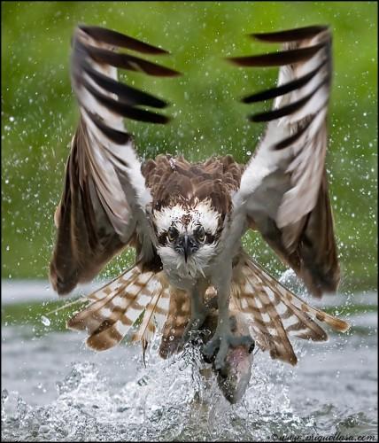wtf-bird.jpg (119 KB)