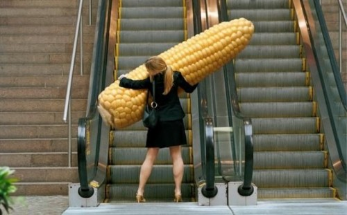 Giant Corn.jpg (54 KB)