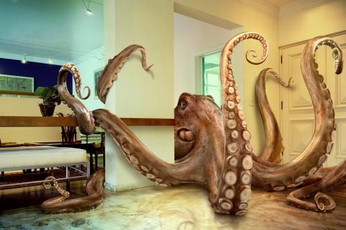 octopus.jpg (485 KB)