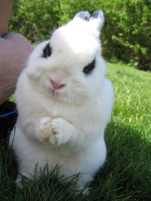 bunnyvillain.jpg