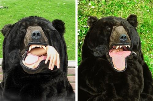 The-Sleeping-Bear.jpg (148 KB)