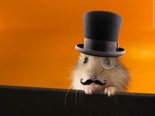 hamster.jpg (47 KB)