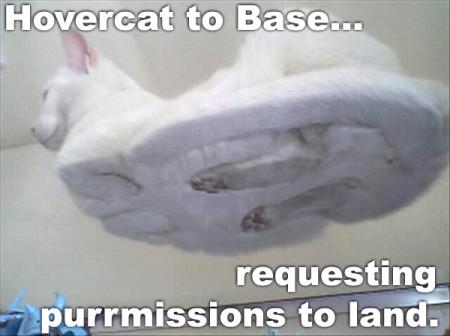 hovercat Hovercat lolcats forum fodder
