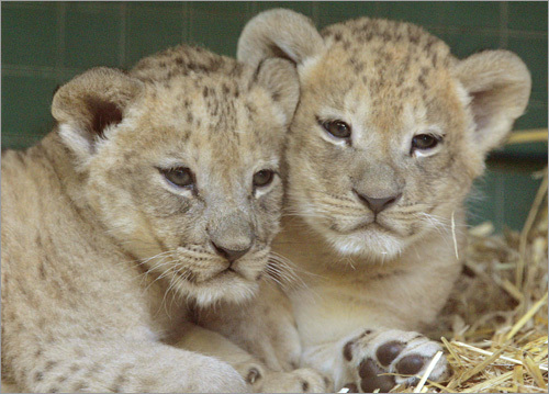 1199289131 8735 New Zoo Babies Cute As Hell Animals