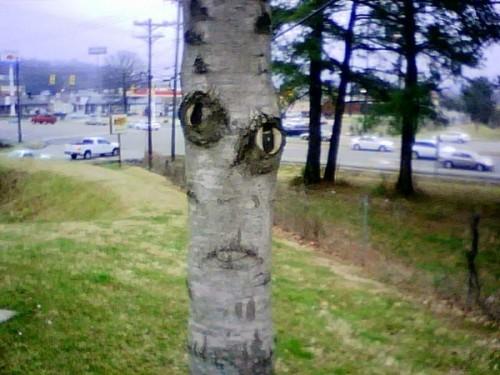 creepytree.jpg (160 KB)
