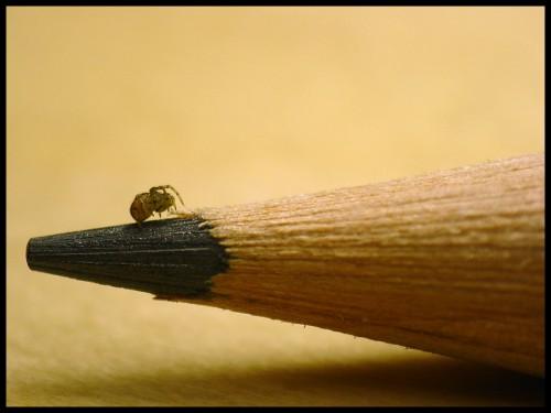spider.jpg (325 KB)