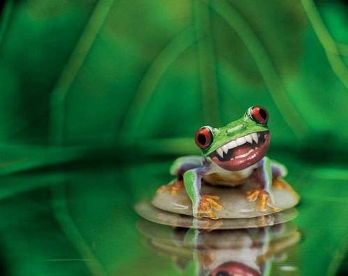 toothyfrog.jpg (26 KB)