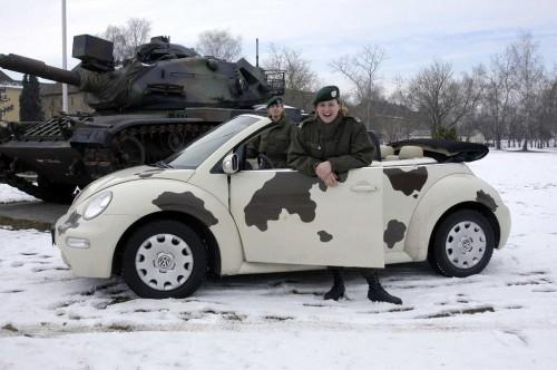 beetle.jpg (117 KB)