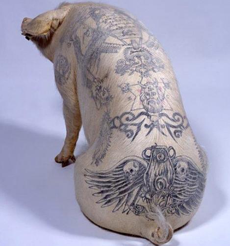 tattooed_pigs_19sfw.jpg (121 KB)