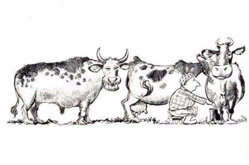 bull.jpg (42 KB)