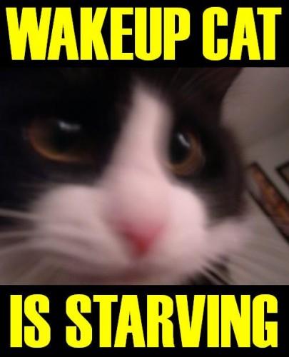 wakeupcat.JPG (35 KB)