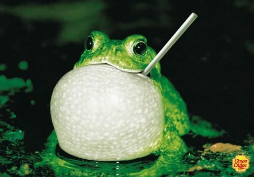 frog.jpg (160 KB)