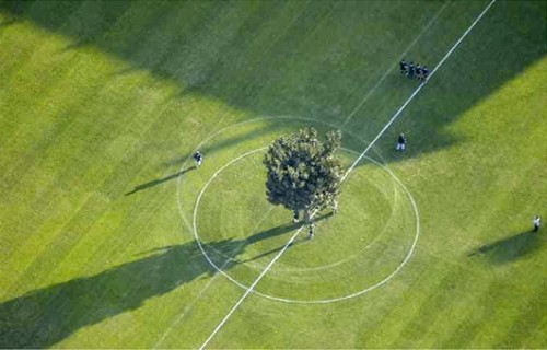 soccertree04.jpg (73 KB)