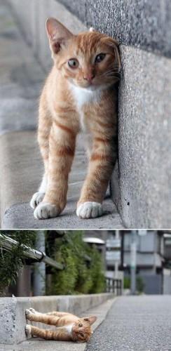 cat1.jpg (73 KB)