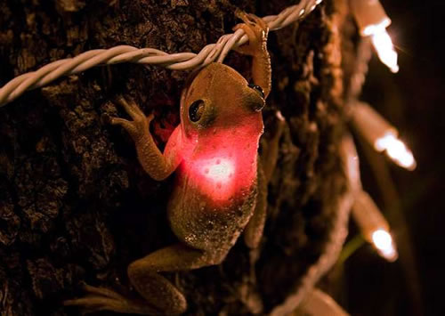 tree frog christmast light ET\s Son? wtf Cute As Hell Animals