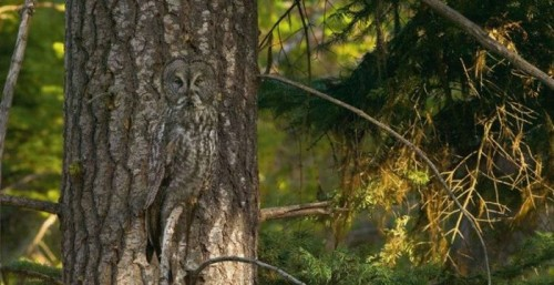 owl 500x257 Just a Tree... Visual Tricks Nature Cute As Hell Animals
