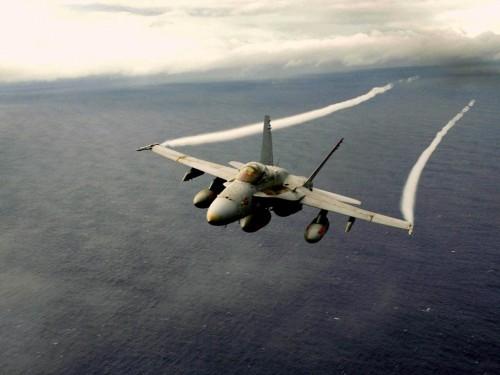 hornet1 500x375 Hornets Sexy