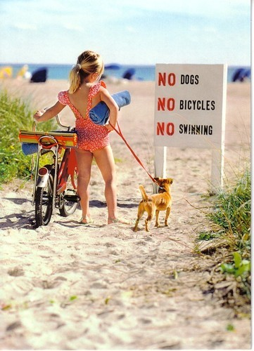 beach,bicycle,dog,funny,girl,happy-d97cf9fb758e1e0e77366e5934efa1ed_h.jpg (57 KB)