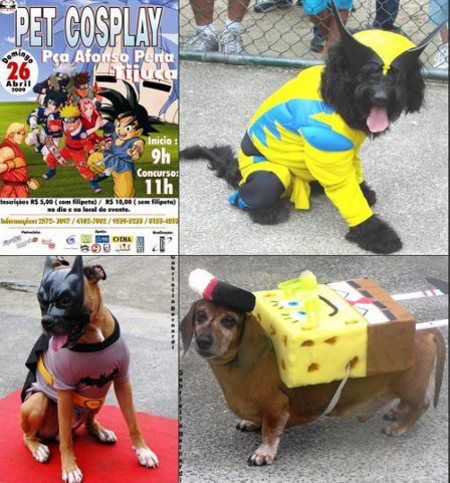pet cosplay.jpg (75 KB)