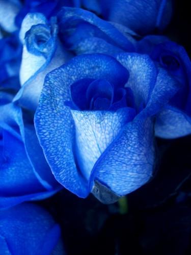 roses.jpg (715 KB)