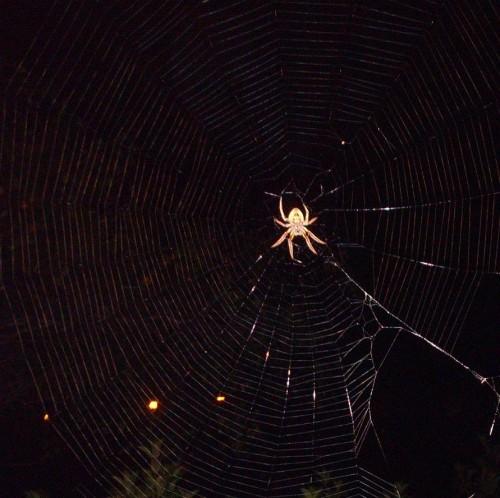 spider.JPG (124 KB)