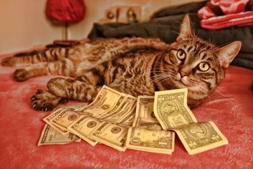 catdog 500x333 Cash Cat lolcats Humor