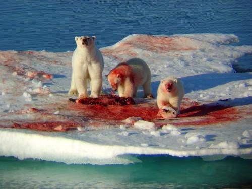 murder-bears.jpg (230 KB)