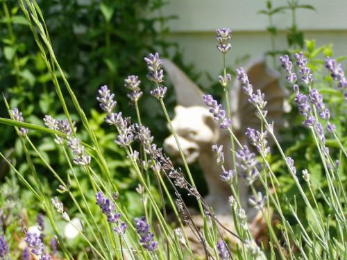 3651869273 c24a980fa8 b 500x375 Gargoyles and Lavender Art