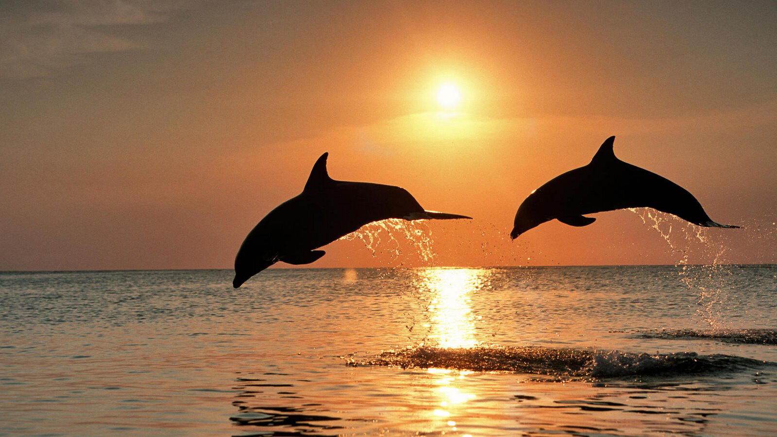 dolphins sunset.jpg