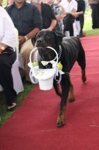 4 332x500 My ring bearer Cute As Hell Animals