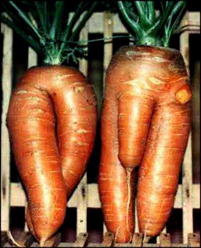 a96758_carrots.jpg (96 KB)