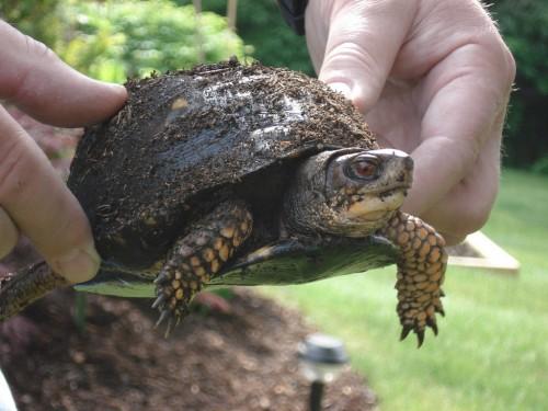turtle.jpg (381 KB)
