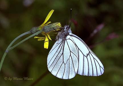 Crata Butterflies :) Nature
