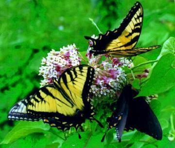 greg048 Butterflies :) Nature