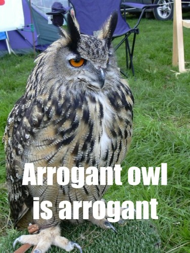 owl_arrogantowl.jpg (178 KB)