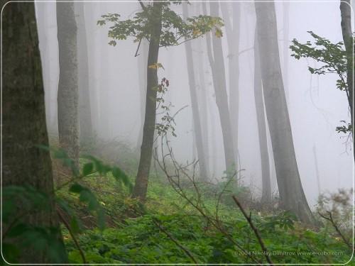 forest_1.jpg (150 KB)