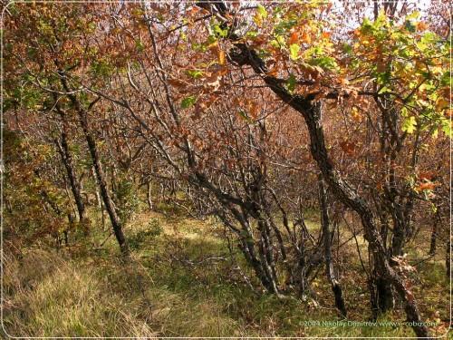 forest_4.jpg (320 KB)