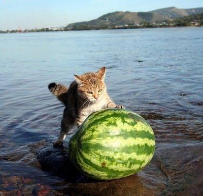 cat.jpg (27 KB)