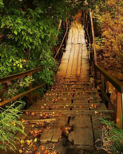 autumn_31.jpg (184 KB)