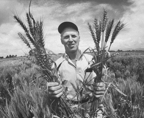 Borlaug2.jpg (57 KB)