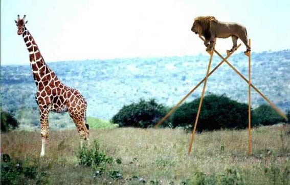 lion_giraffe.jpg
