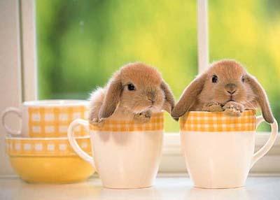 rabbit2-wlals1.jpg