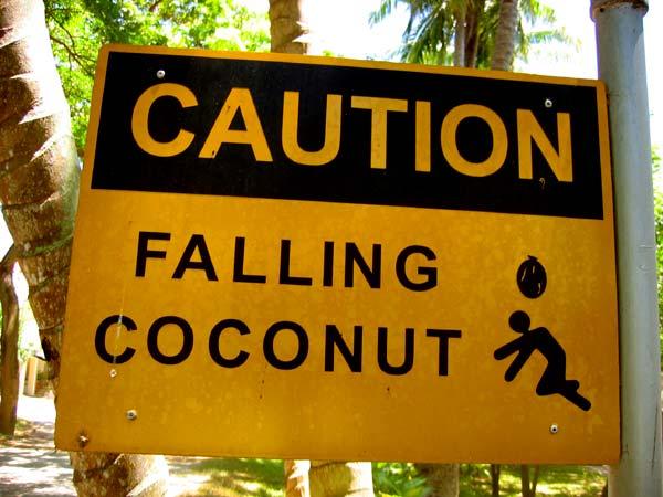 fallingnuts.jpg