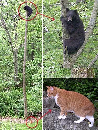 killer-cat.jpg