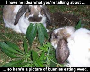 weedbunnies.thumbnail Weed Bunnies Humor Cute As Hell Animals