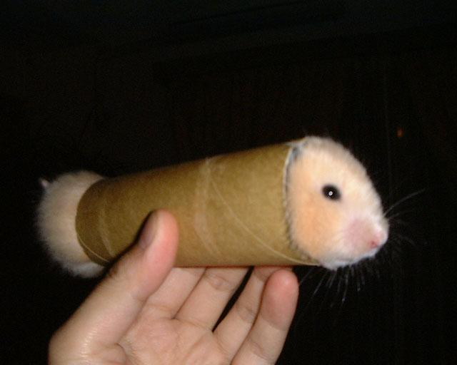ready to roll gerbil Prepackaged Gerbil wtf Humor Forum Fodder Cute As Hell Animals