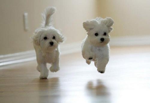 floating-cute-puppies.jpg