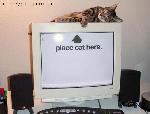 place cat here Place Cat Here Wallpaper Humor Computers