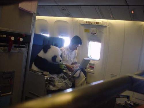 airplane-panda.jpg