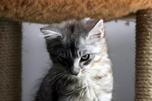 sinister-cat.jpg